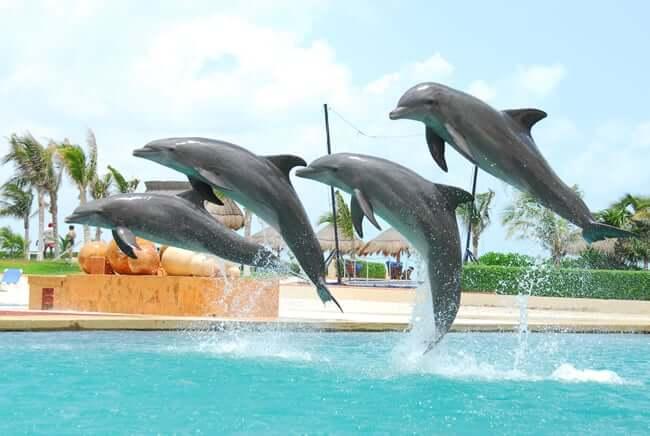 Dónde nadar con delfines en Cancún